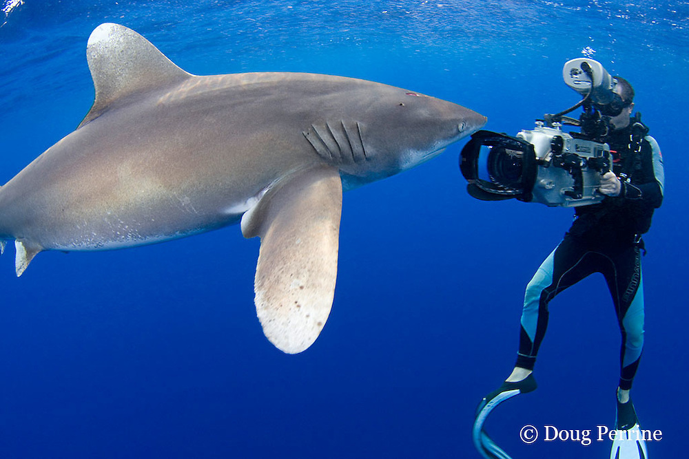 Scubazoo cameraman Jason Isley films oceanic whitetip shark, Carcharhinus longimanus, off the Kona Coast of Hawaii Island ( the Big Island ), Hawaiian Islands ( Central Pacific Ocean ) MR 383