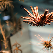Exhibit on marine life at the Smithsonian National Museum of Natural History in Washington DC.