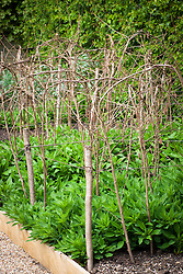 Plant supports for alstroemeria
