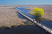 bird watchers on wooden boardwalk trail looking for brds during the spring migration near Leamington <br />