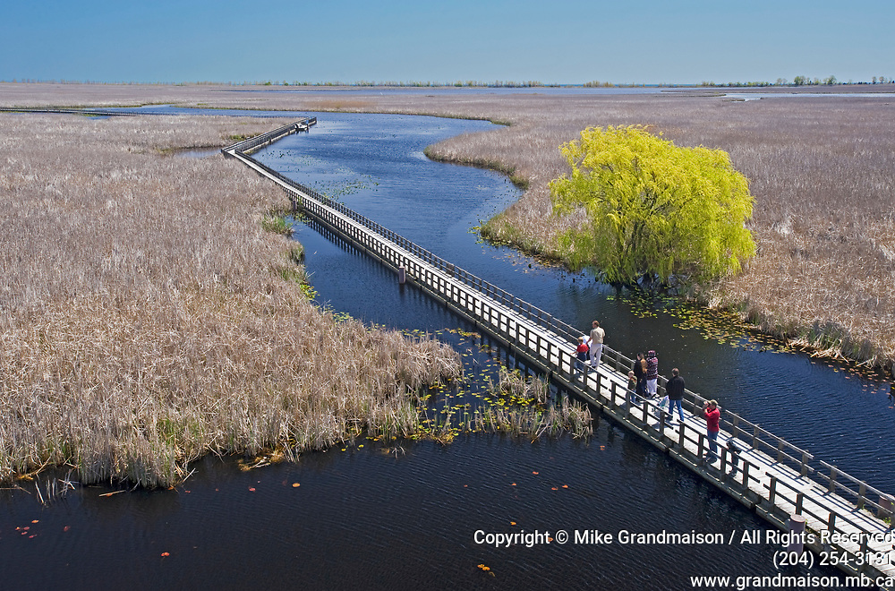bird watchers on wooden boardwalk trail looking for brds during the spring migration near Leamington <br />Point Pelee National Park<br />Ontario<br />Canada