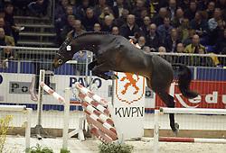 274 Tenessee<br />KWPN hengstenkeuring 2003<br />Photo © Dirk Caremans