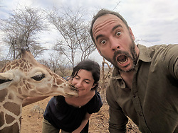 "Dave Matthews (@davematthewsband) takes a selfie with ""Shorty"" the reticulated orphaned giraffe and Ami Vitale, oblivious, gets a kiss from him instead at @sararacamp. The tallest living land animal, a giraffe stands between 4.5 and 5 meters tall – and almost half that height is neck.<br /> <br />  You can support this incredible place and the people who protect wildlife. Make a $10 contribution in support of Reteti for a chance to win a trip to Kenya, see Dave Matthews in concert and take home Dave's guitar with @prizeo (Link in profile). Not only will you be helping care for orphaned baby elephants and strengthening community ties, you'll also have a chance to win a life-changing trip to see the sanctuary in person. The first $10,000 in funds raised will be generously matched by Elephant Gems (@elephantgems). <br /> <br /> Reteti operates in partnership with Conservation International (@conservationorg) who provide critical operational support and work to scale the Reteti community-centered model to create lasting impacts worldwide. <br /> <br /> Photo by @davematthewsband."