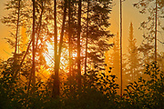 Fog in boreal forest at sunrise<br />Latulipe<br />Quebec<br />Canada