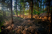 Las na Kaszubach w okolicach Wierzycy