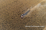 63801-12417 Harvesting corn in fall-aerial  Marion Co. IL