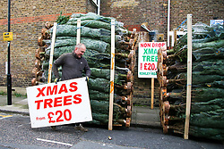 © Licensed to London News Pictures. 02/12/2020. London, UK. Real Christmas trees for sale in north London as COVID-19 lockdown restrictions are lifted. From today, 2 December, England returns to tiered COVID-19 restrictions, allowing non-essential businesses to re-open. Photo credit: Dinendra Haria/LNP