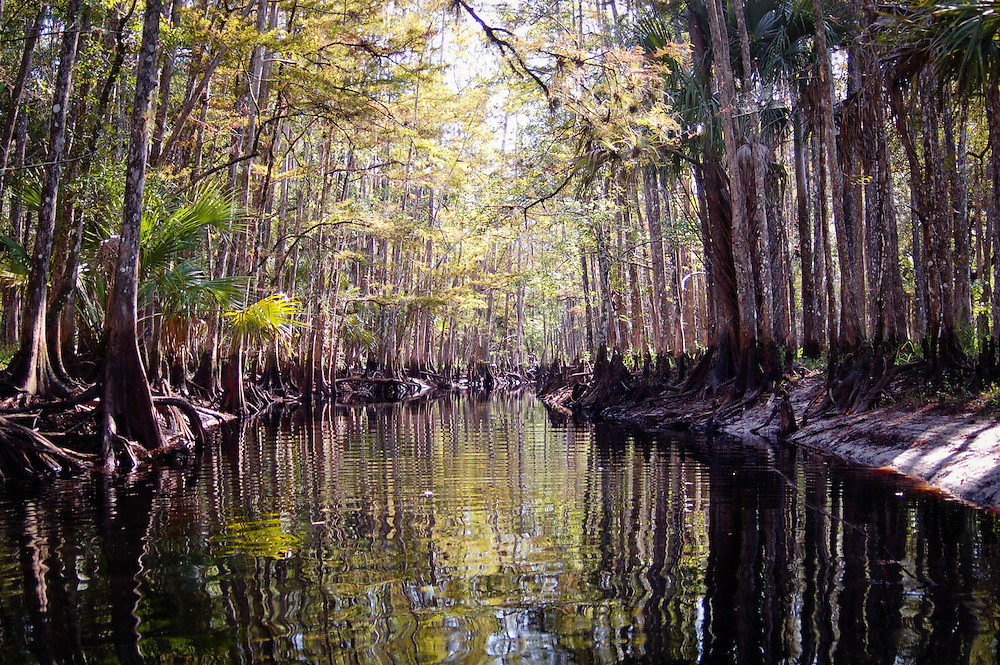One of the best natural areas in all of Florida - Fisheating Creek in South-Central Florida. This creek is full of fish and alligators, and can only be accessed by canoe or kayak.