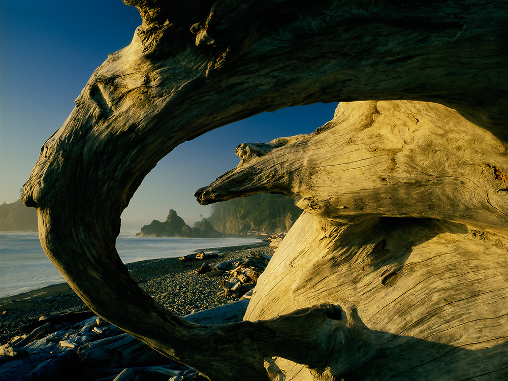 Olympic National Park, Washington, USA. Pacific Coast, Ruby Beach and Driftwood, Afternoon Light.