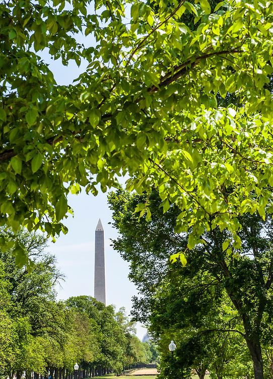 The Washington Monument framed by trees on the National Mall, Washington, DC, USA.