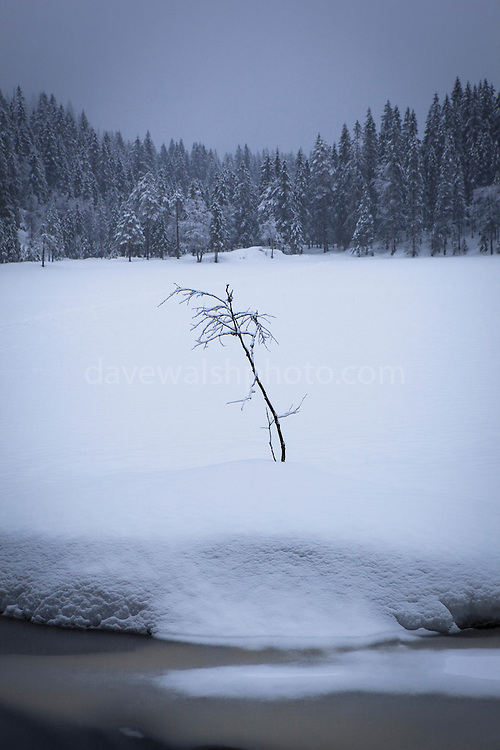 Lone tree in the forests near Tryvann, not far from the Norwegian capital, Oslo