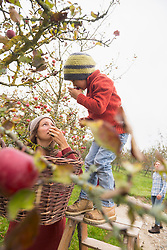 Mother and son picking apples from a tree and smelling them in an apple orchard, Bavaria, Germany