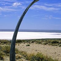 South America, Argentina, Peninsula Valdes. Whale Bone at Salt Lake below sea level.