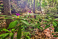 Strandzha forest