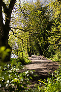Green trees and country walking paths through Rozel woods, Jersey, CI