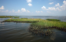 28 May 2010. Barataria Bay to Grand Isle, Jefferson/Lafourche Parish, Louisiana. <br /> Oil penetrates the fragile grass lands perched at the mouth of Mississippi delta is all that seperates land from the Gulf of Mexico. The region is strategically vital to the American oil and gas industry and a major player in America's seafood industry. BP's catastrophic oil spill continues to spew a black tide of death which continues to encroach upon everything in the region. The economic impact is devastating with shrimp boats tied up, vacation rentals and charter boat fishing trips are cancelled. The only real business is cleaning up big oil's disasterous screw up. Oil from the Deepwater Horizon catastrophe is evading booms laid out to stop it thanks in part to the dispersants which means the oil travels at every depth of the Gulf and washes ashore wherever the current carries it. <br /> Photo credit; Charlie Varley<br /> www.varleypix.com
