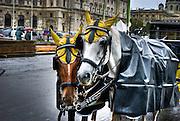 Horse drawn cart, Salzburg, Austria