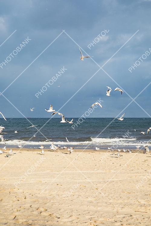 Cold beach of Poland
