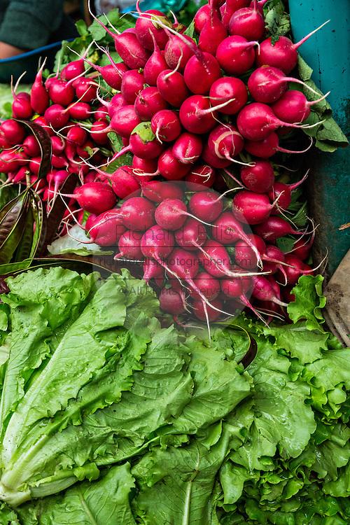 Fresh radish and lettuce at Benito Juarez market in Oaxaca, Mexico.