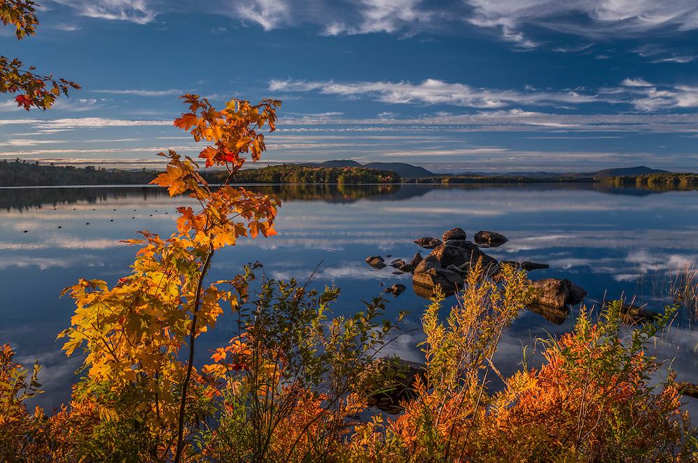 Last light on fall foliage saplings on shoreline of Lake Umbagog State Park, Cambridge, NH
