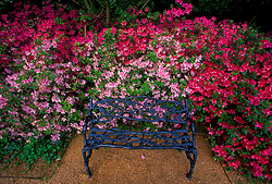 Stock photo of a bench surrounded by flowers in Bayou Bend Park in Houston Texas