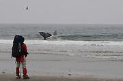 Close encounters with a Grey Whale - Shi Shi Beach - Olympic National Park - Washington State