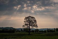 Boundary, Staffordshire, England, UK.<br /> Photo: © Ed Maynard<br /> 07976 239803<br /> www.edmaynard.com