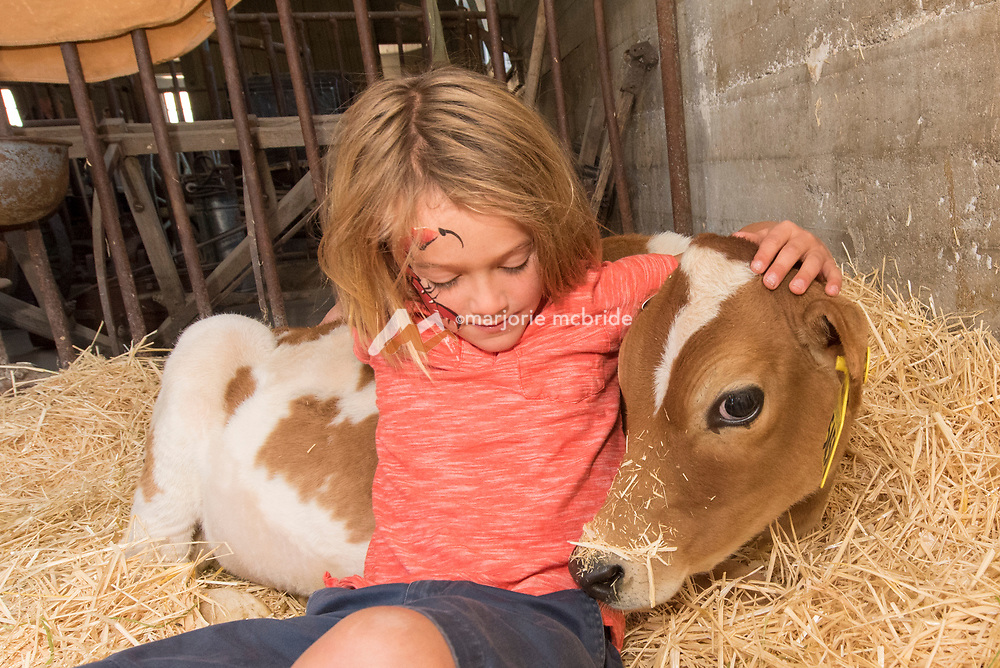 Little boy snuggling with a calf at the Thousand Springs Art Festival at Ritter Island near Hagerman, Idaho. MR