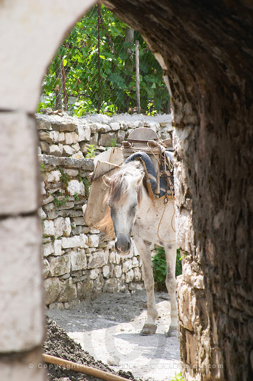 View through an arched portico of a horse saddled with saddle bags and carrying a heavy load. Berat upper citadel old walled city. Albania, Balkan, Europe.
