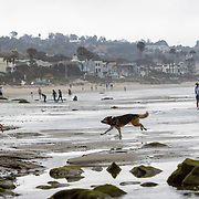 Dogs at play in and near the water in Malibu.
