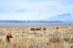 Elk Hunter, Jackson Hole Wyoming