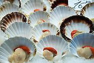 Fresh scallops in their shells on ice at Venice Fish market - Venice - Italy