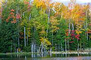 64776-02011 Red Jack Lake in fall color Alger Co.  MI