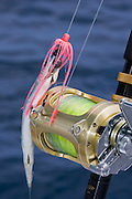 Heavy gold reel with single rigged ballyhoo hooked on harness eye.