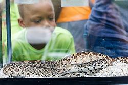 Kids examining snakes, Mitchell Lake Audubon Center, San Antonio, Texas, USA.