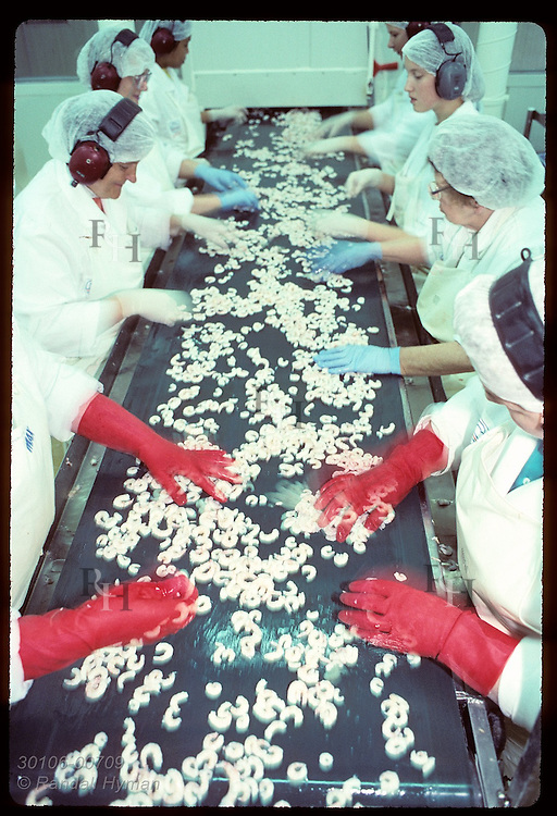 Women's hands blur as they sort shrimp on conveyor belt at the Ritur factory in Isafjordur. Iceland