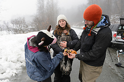 """Rachel Wheat, a graduate student at the University of California Santa Cruz (center) holds bald eagle (Haliaeetus leucocephalus) """"4P"""" as it is being prepared to be released back into the wild. Yiwei Wang, graduate student, University of California Santa Cruz (left), and Steve Lewis, Raptor Management Coordinator, U.S. Fish & Wildlife Service (right), remove the leather booties that protected the researchers from the bald eagle's powerful talons during the process of taking measurements and attaching the GPS satellite transmitter. Wheat is conducting a bald eagle migration study of eagles that visit the Chilkat River for her doctoral dissertation. She hopes to learn how closely eagles track salmon availability across time and space. The bald eagles are being tracked using solar-powered GPS satellite transmitters (also known as a PTT - platform transmitter terminal) that attach to the backs of the eagles using a lightweight harness. The latest location of this eagle can be found here: http://www.ecologyalaska.com/eagle-tracker/4p/ . During late fall, bald eagles congregate along the Chilkat River to feed on salmon. This gathering of bald eagles in the Alaska Chilkat Bald Eagle Preserve is believed to be one of the largest gatherings of bald eagles in the world."""