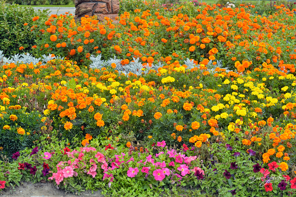 Floral display at the Quesnel Visitors Centre, Quesnel, British Columbia, Canada