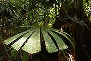 Peradayan Forest Reserve, Brunei