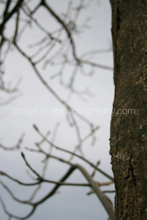 Close up of tree bark in the winter at public park in Dublin Ireland