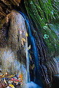 Fall Foliage and flowing water from the Emerald Pools in Zion National Park, Utah.