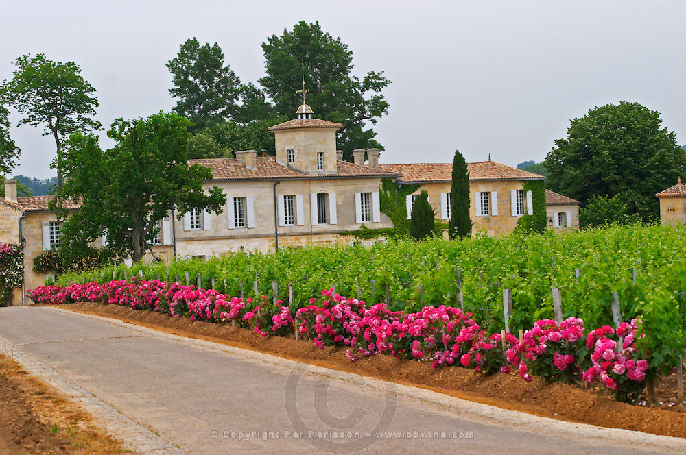 Chateau Gazin, its vineyard with a rose bush at the end of each row of vines and the road leading to the chateau Pomerol Bordeaux Gironde Aquitaine France