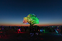 "Tree of Ténéré by: Alexander Green, Zachary Smith, and Patrick Deegan from: San Francisco, CA year: 2017<br /> <br /> An enormous lifelike tree, Ténéré offers shade to wanderers, adventure to climbers, and transcendent community to those gathered beneath its 15,000 LED leaves. Like its namesake – considered the most isolated tree on Earth until its destruction in 1973 – Ténéré serves as a place of refuge and ritual for desert wanderers. Standing more than three stories tall, it beckons to passersby with the promise of shade and adventure, conjuring spontaneous communities out of desert sand and sun. At night, LEDs hidden within each leaf begin to glow. The 15,000 leaves form a dome-shaped ""canvas of light"" that towers over the playa, spanning more than a thousand square feet. Participants lying under the tree experience sublime light shows set to ambient music or live performance. And they directly influence the canopy lights through their sounds and biorhythms, creating moments of transcendent oneness with each other and with nature. URL: https://www.treeoftenere.com Contact: contact.tenere@gmail.com"