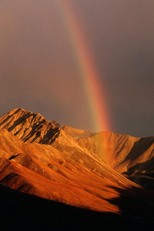 Denali National Park, AK, USA<br /> Alaska Range, Pirate Creek Rainbow.<br /> Fall colors and rainbow through dark clouds.