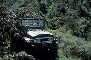 Off road jeep driving through dense growth and trees, Santa Cruz Island, Channel Islands, California