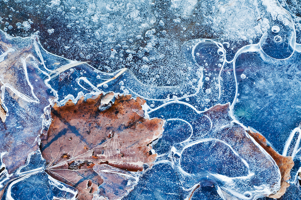 A leaf is frozen among the ice bubbles in this lake at the Morton Arboretum in Lisle, IL.