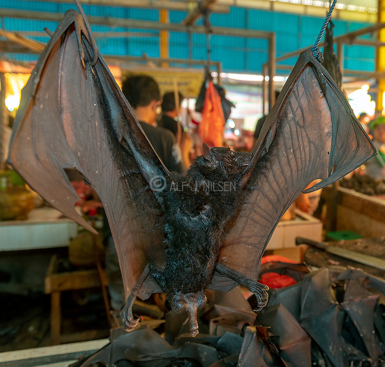Flying foxes (bats) for sale at Tomohon extreme market, Minahasa, north Sulawesi. Indonesia.