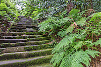 Zuisenji Temple Moss Stairway - Zuisenji Temple Garden was laid out by renowned garden designer and Zen Buddhist monk Muso Kokushi, founder of the temple.  Zuisen-ji is located in a valley called Momijigayatsu surrounded by hills which serve as natural background for the garden.  Beyond the small pond Tennyodo cave is a hall used for meditation and appreciating the moon reflected on the surface of Choseichi Pond.  Zuisenji Temple Garden uses these natural rocks and caves as elements of the garden. Bridges are built across the western side of the pond.  The garden is the only remaining one of the gardens in Kamakura that were constructed during the Kamakura Era.  Must Kobushi believed that understanding landscapes and gardens led to the cultivation of the human mind.  The temple is also known for its flowers and trees in other parts of the temple grounds, particularly plum trees and hydrangeas.