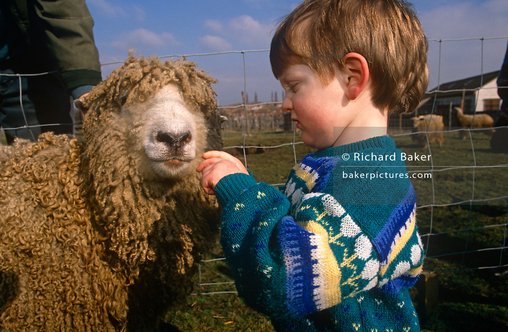 Young boy in a field plays with a ewe at Drusillas Park Zoo.