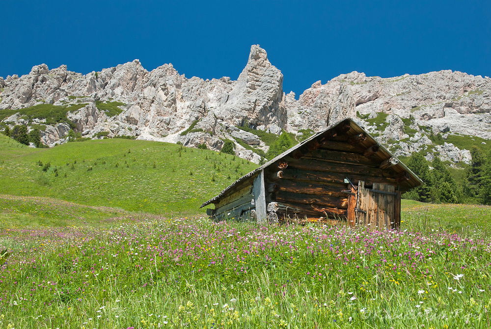 Rustic hut surrounded by wildflowers in the Dolomite Mountains, Italy, near the Val Badia between Passo Gardena and Corvara.